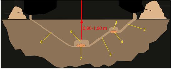 Bau des Heliocopris delone