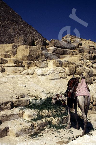 Cheops-Pyramide: Seite, Bild-Nr. Grßansicht: 21b/3