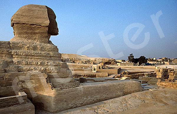 Große Sphinx von Gizeh: Statue, Bild-Nr. Grßansicht: 560a/14