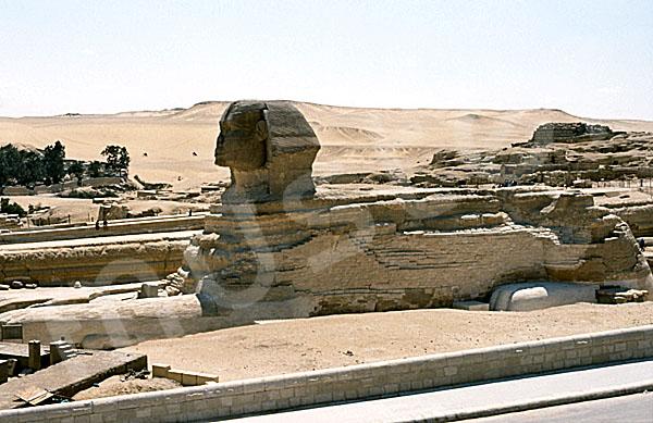 Große Sphinx von Gizeh: Statue, Bild-Nr. Grßansicht: 560a/16