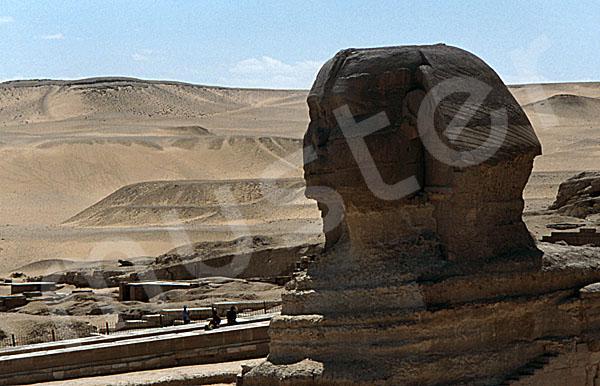 Große Sphinx von Gizeh: Statue, Bild-Nr. Grßansicht: 560a/42