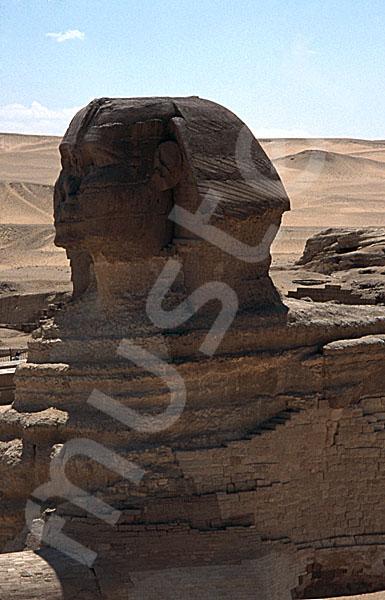 Große Sphinx von Gizeh: Statue, Bild-Nr. Grßansicht: 560a/43