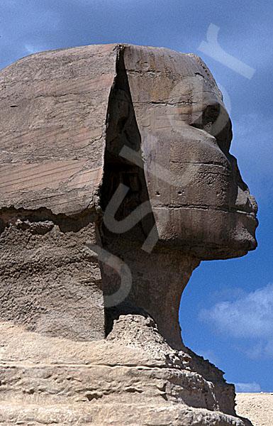 Große Sphinx von Gizeh: Statue, Bild-Nr. Grßansicht: 560b/27